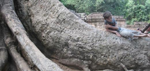 On a giant tree trunk in the ruins of Ta Prohm, Cambodia.