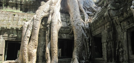 Giant tree roots grow down over the ancient monastery of Ta Prohm, near Angkor Wat, Cambodia.