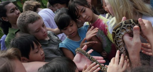 Class lesson on snakes: children handling a reticulated python.
