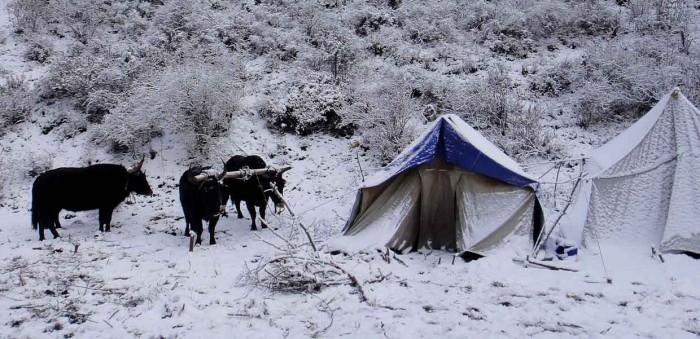 Songpan Camping Snow
