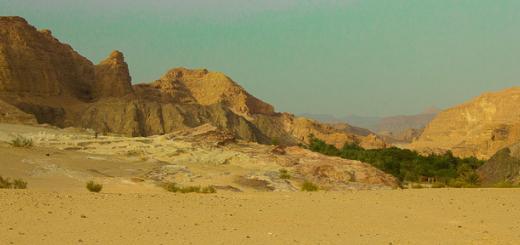 Ein Khudra oasis in the Sinai Desert, Egypt.