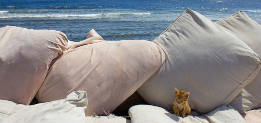Kitten on cushions in rooftop restaurant in Dahab, Egypt.