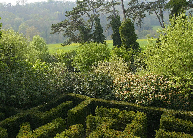 Edge of hedge maze with parkland in the background.