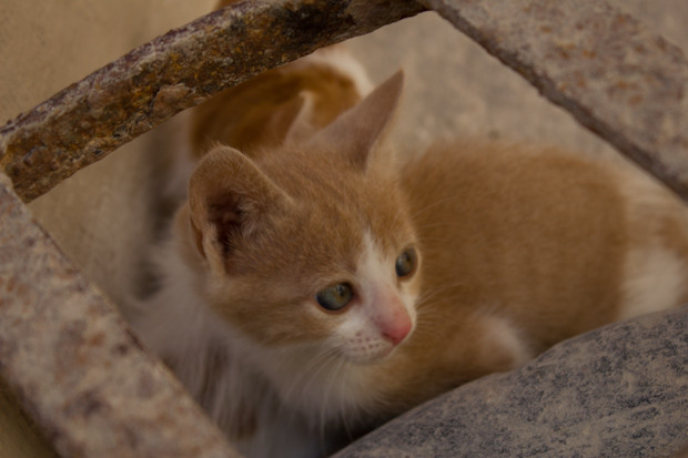 Kitten in Qaitbey Castle, Alexandria.