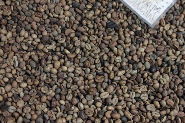 Kopi luwak: roasted coffee beans in a basket