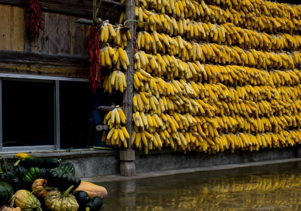 Drying corn cobs and fresh pumpkins in Naxi guesthouse, Tiger Leaping Gorge.