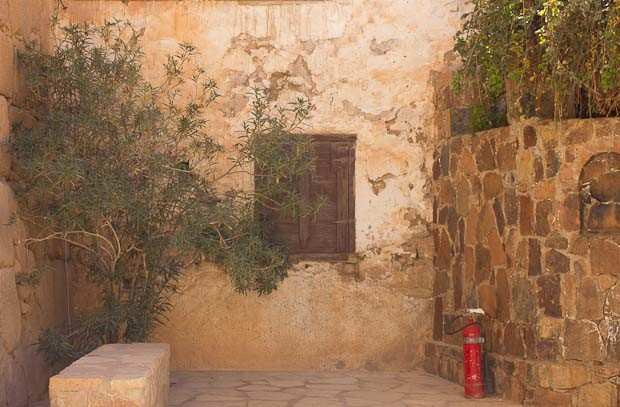 Burning bush and non-burning bush, with fire extinguisher, St. Catherine's monastery, Sinai.