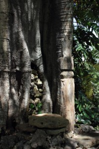 Nome, Timor: simple carved totem pole in the shade of a strangling fig.