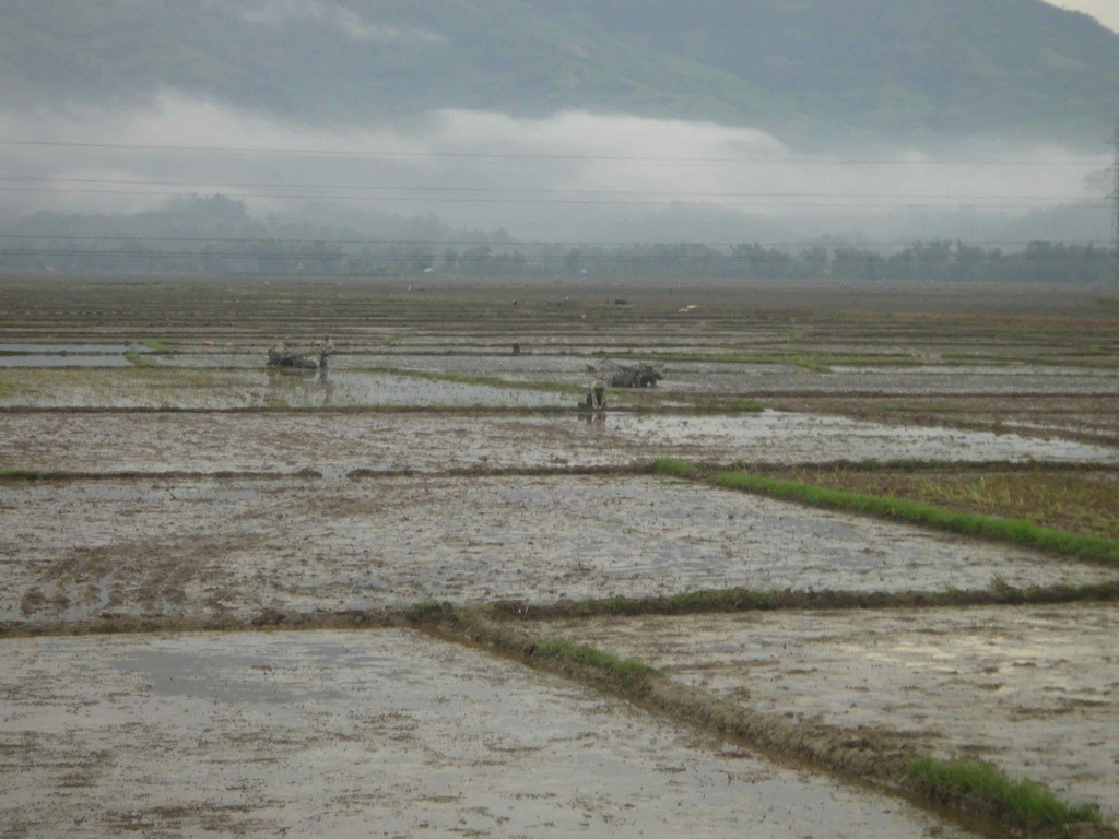 view of flat paddies, ploughing and misty mountains in the background, Dien Bien Phu, Vietnam.