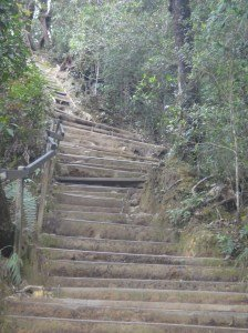 Wood-edged earth steps at beginning of Summit Trail. Mount Kinabalu.
