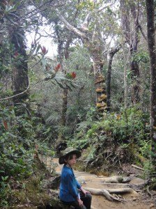 Z in the lush, cool, mossy forest of the lower slopes of Mount Kinabalu.