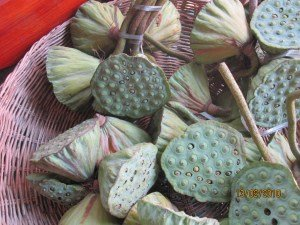 Lotus Flowerheads for Sale by the Roadside, Cambodia