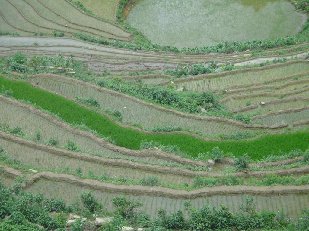 Terraced hillside and paddy fields, Sapa, Vietnam.
