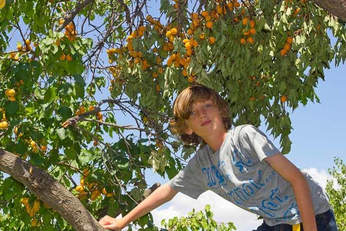 Zac in apricot tree.