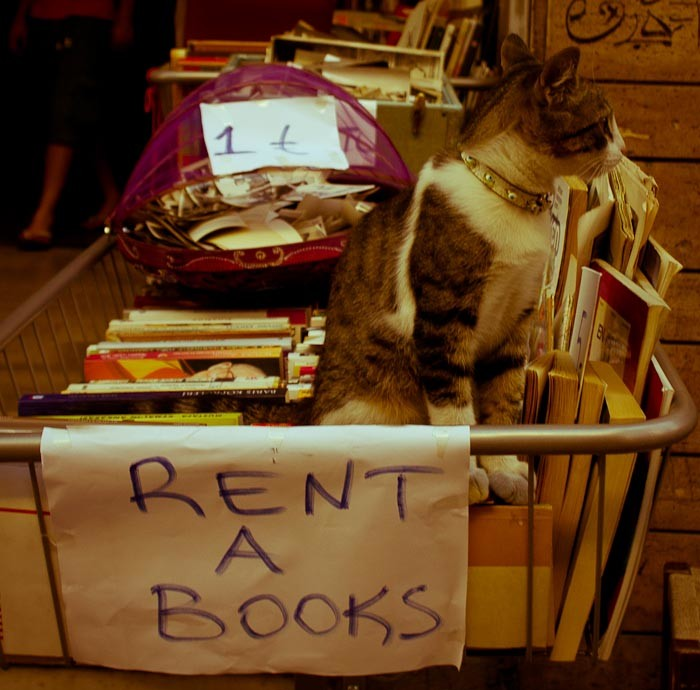Cat on tray of second-hand books, Istanbul.
