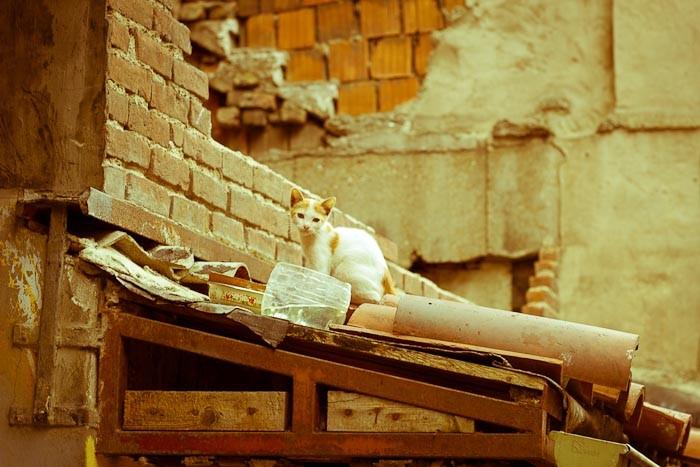 Cat on roof in Cihangir Istanbul.