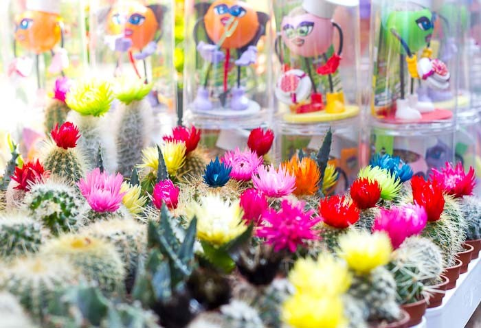 Cactuses at the Istanbul Animal and Flower Market.