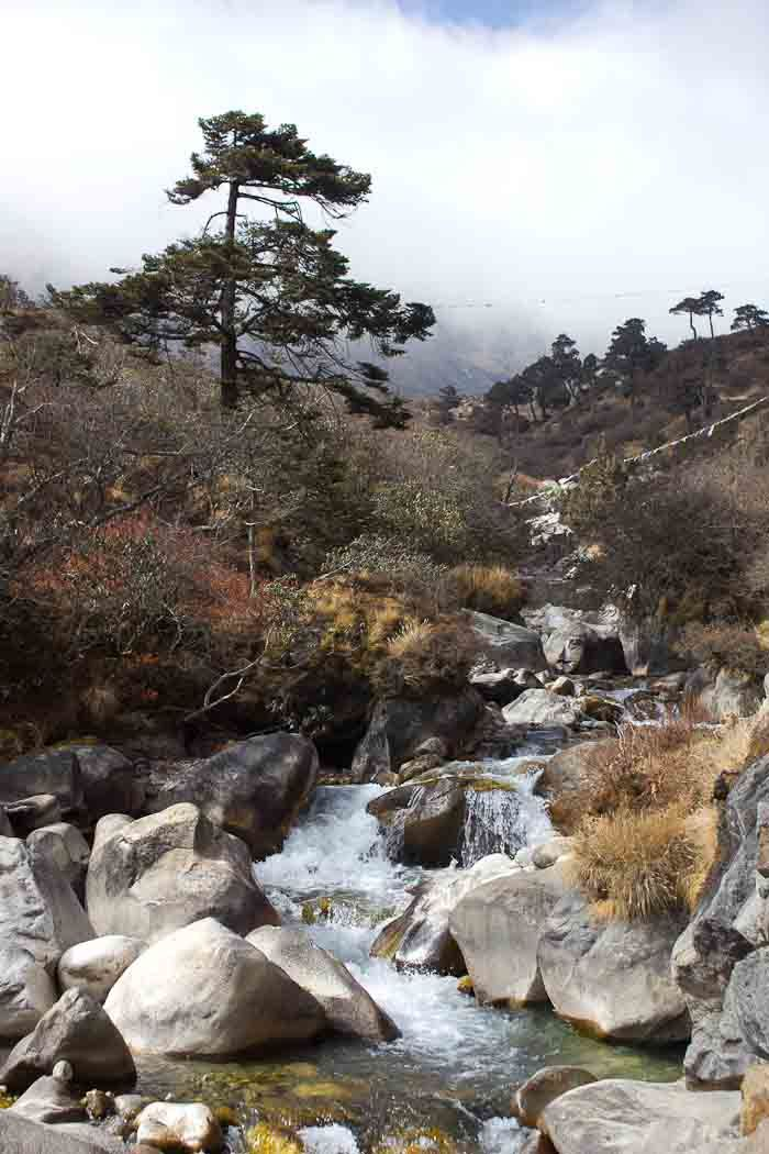 Everest Base Camp: junipers, rime and mountain streams outside Thame.