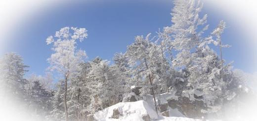 Snow-covered trees at the top of the slope in Beidahu.