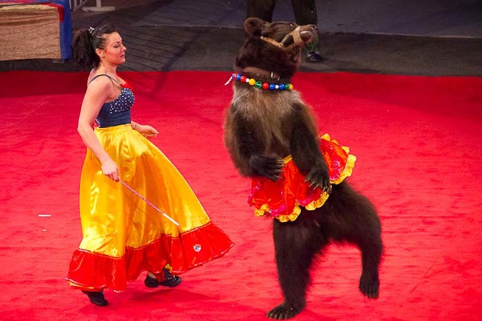 Bear in minidress dancing with bear tamer at the circus in Mongolia.