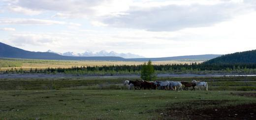 Horses, mountains and fresh grass en route to the Darkhad Depression, Mongolia.