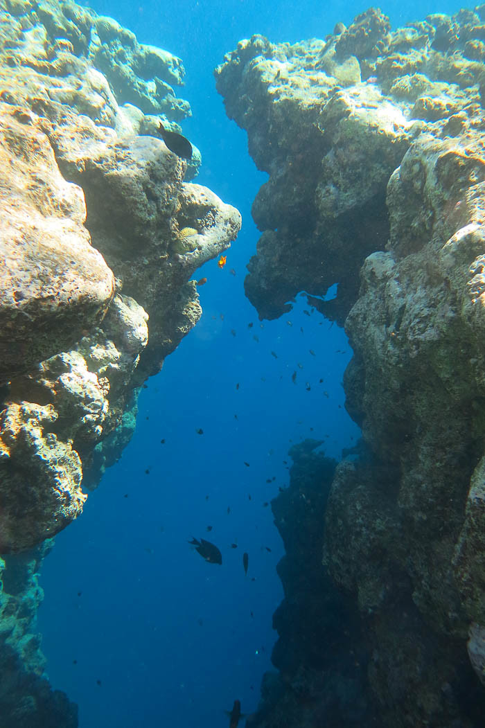 El Bells provides a spectacular entry into the Blue Hole, even if the coral is long gone.