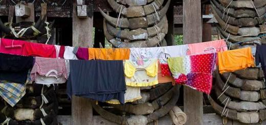 Laundry hanging out to dry in front of buffalo skulls, Toraja, Indonesia.