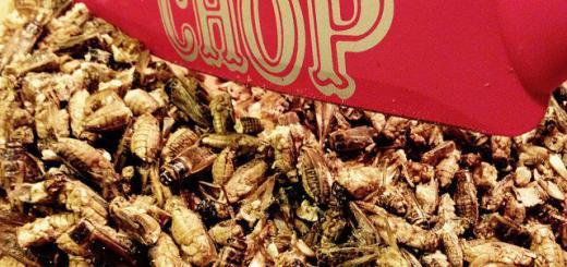 Knife slices through edible insects