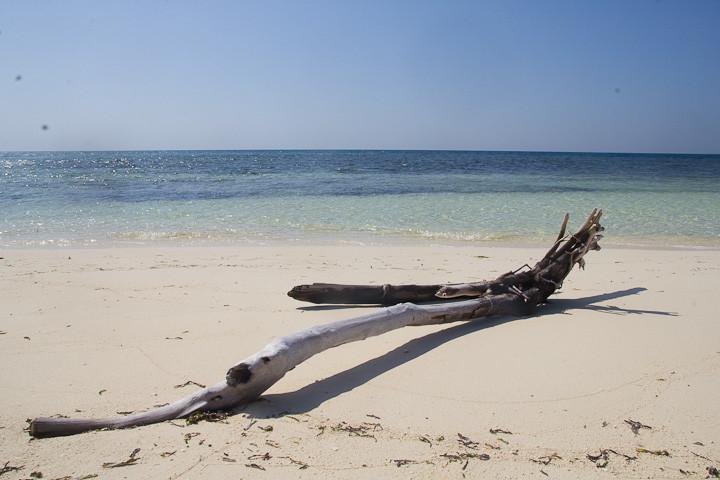 Driftwood on another pristine Spermonde beach.